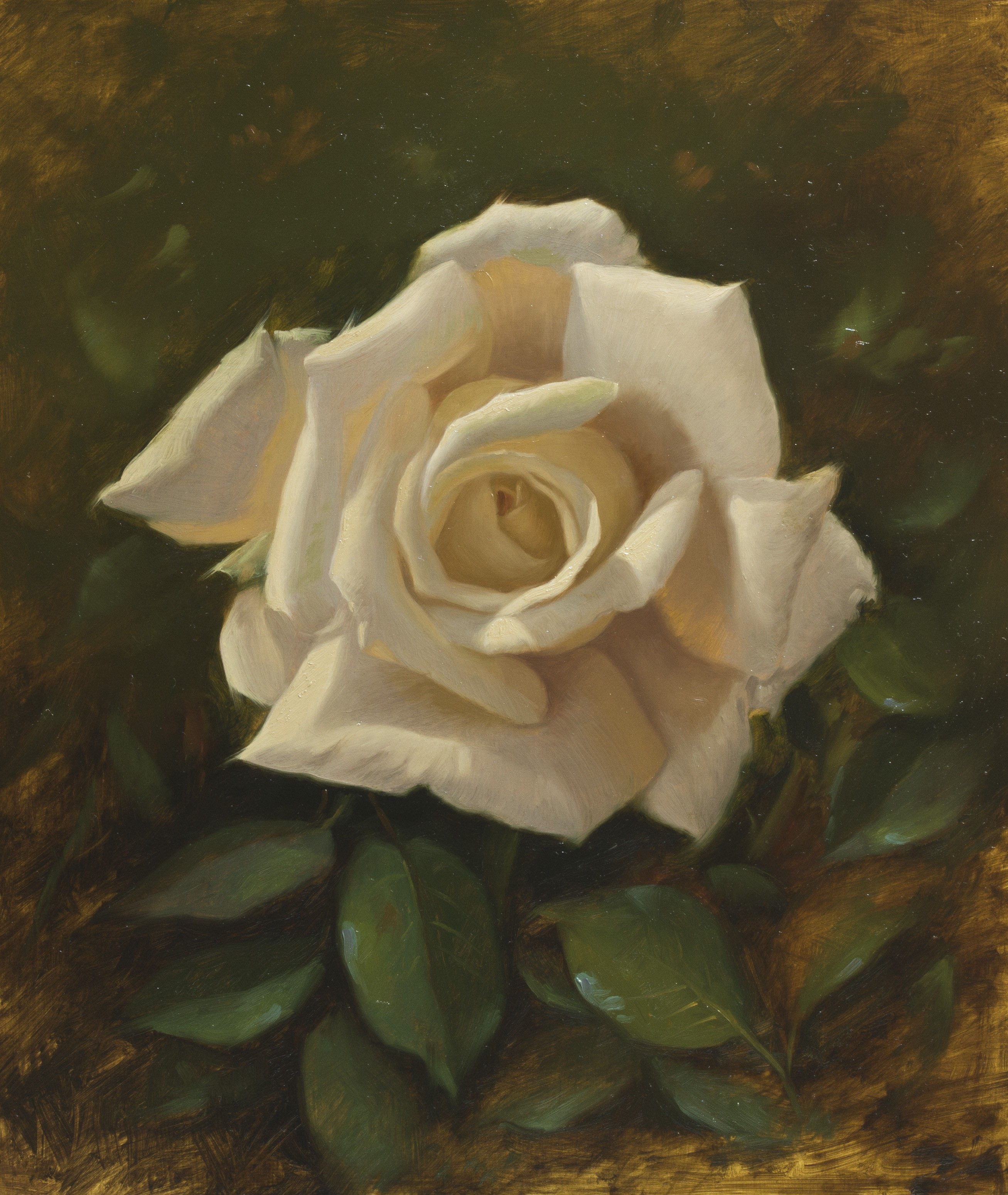 white-rose---oil-on-acm-30-x-35-cm.jpg